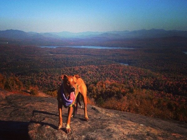 The Adirondacks are some of the most beautiful views you will ever see and the puppy is adorable!