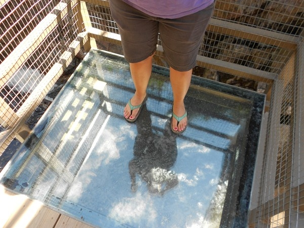 This glass bottom platform is a fun way to see the raging Ausable River at High Falls Gorge