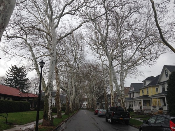 Residents enjoy beautiful tree-lined streets