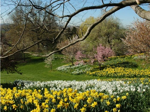 Highland Park was designed by Frederick Law Olmsted and is the site of the annual Lilac Festival