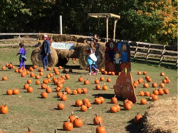 Enjoying Halloween at Maples Farm