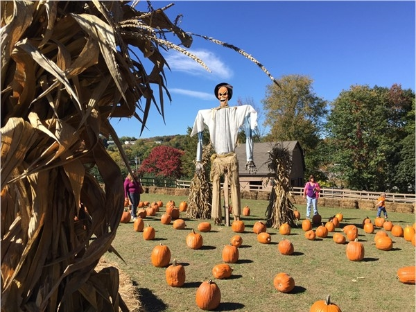 Enjoying Halloween at Maples Farm, including their giant scarecrow!