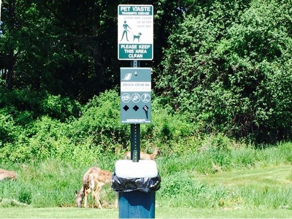 Deer ticks cause disease too