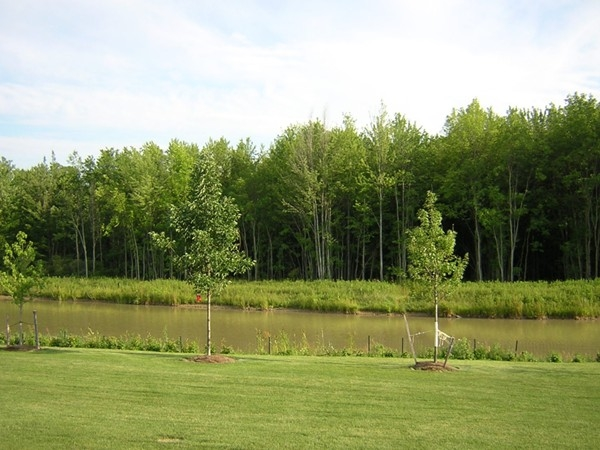 Many homes in Majestic Woods open to a large pond. Its a great place for bird watching.