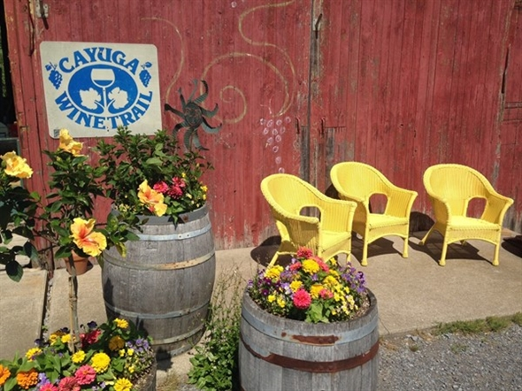 Find charming beauty along the Cayuga wine trails on Rt 89 in Seneca County