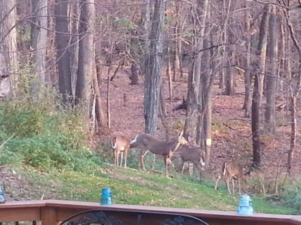 Wildlife on West Hill