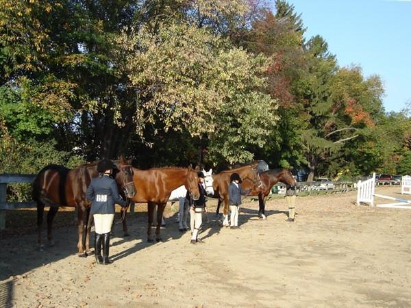 Local horse show at Thomas Bull Park