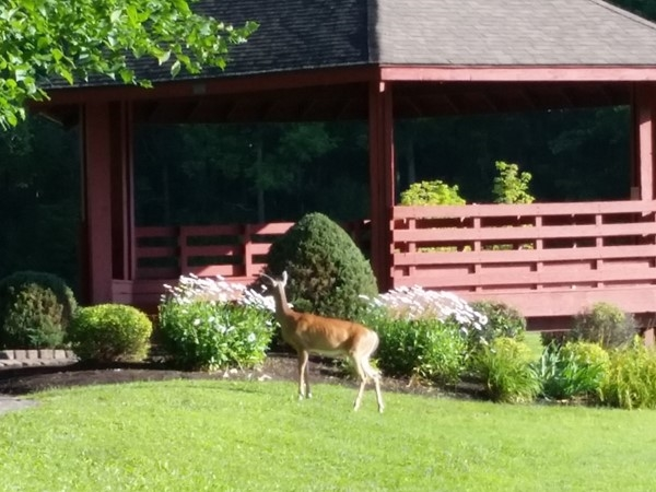 Wildlife in the heart of Amherst, NY