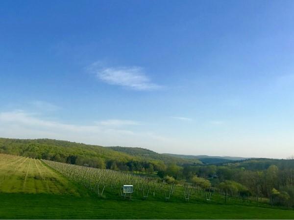 Millbrook Vineyards - beautiful mountain views