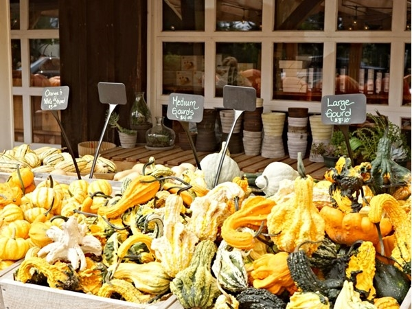 Different sizes and colors. It's pumpkin time at the Milk Pail Farm