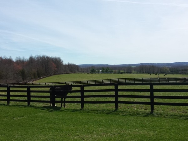 Blue Chip farm is 700 acres of beautiful rolling land dedicated to Standardbred breeding