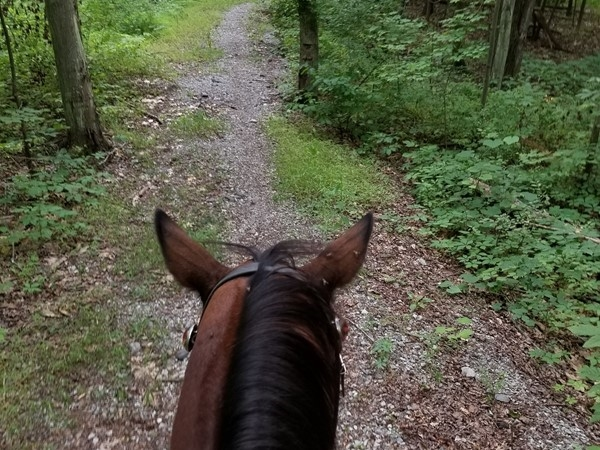 Great trails for horses and bikers at Stewart State Forest