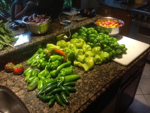 Fishkill Farms - A beautiful selection of peppers