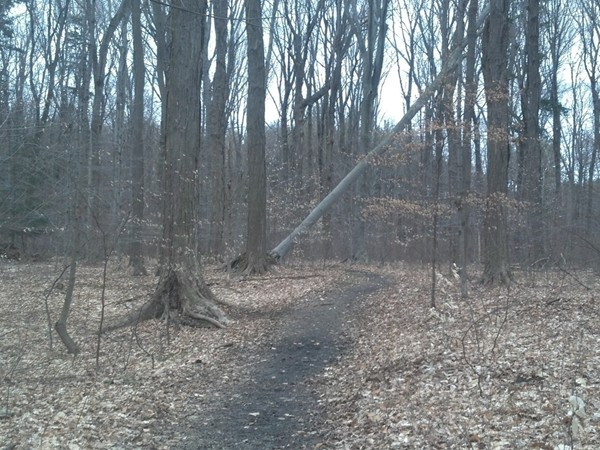 Miles of trails in the 550 acre Wesbter Park plus camping and playgrounds