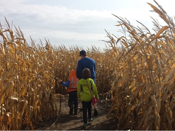 Cambria Corn Maze. Fun and educational!