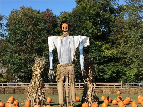 Scarecrow at Maples Farm
