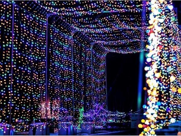 Wall of lights at Magic of Lights