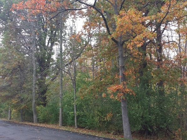 Fall foliage - About 1/2 the condos in Beacon Park have views of woods