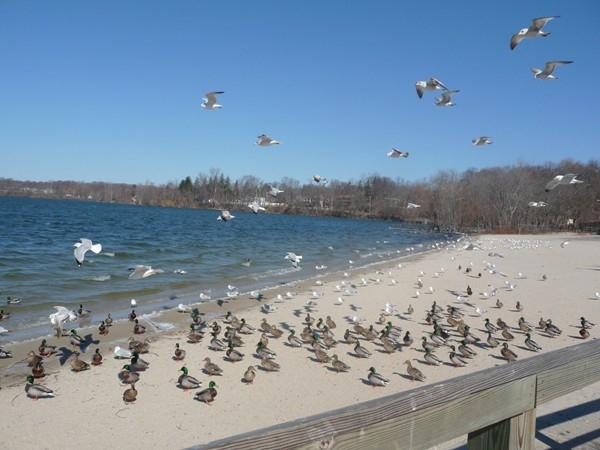 The birds have a good time at the Lake.