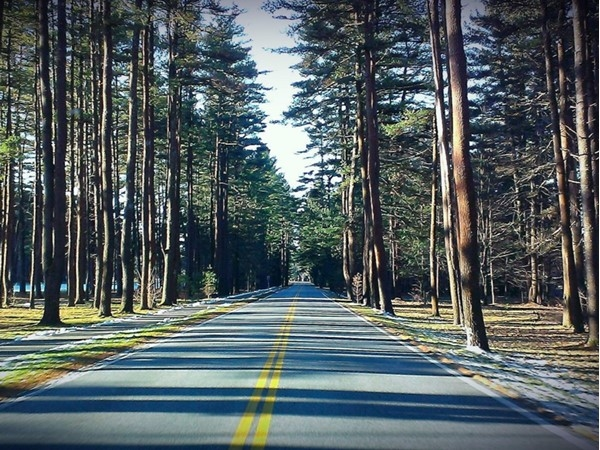 "Chilly, early winter afternoon along the ""Avenue of the Pines"" byway in Saratoga State Park"