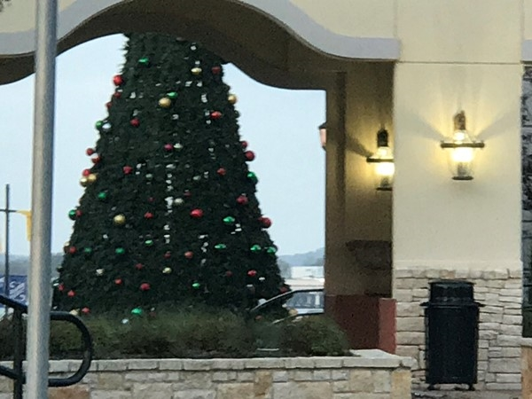 The Christmas tree is up at the Harbor