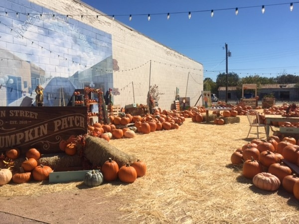 Pumpkin Patch in Downtown Royse City