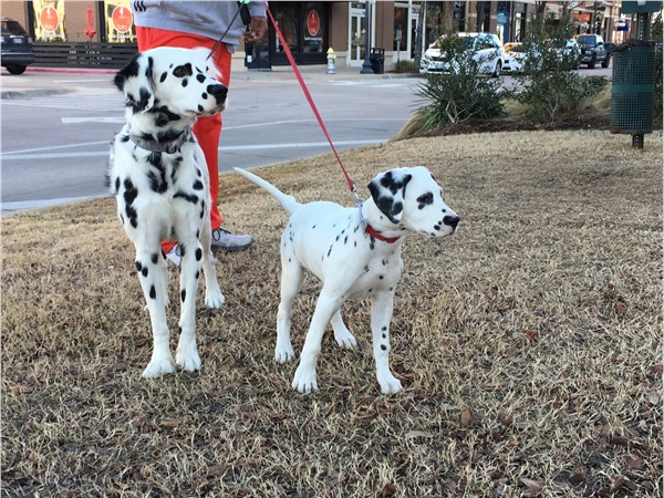 Even the pups enjoy Frisco's Downtown Square