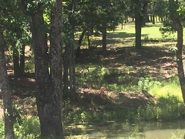 Beautiful acreage properties in Hunt County
